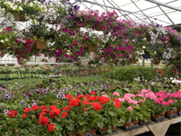 Floriculture and ornamental plants