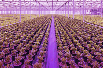 greenhouse_cultivation